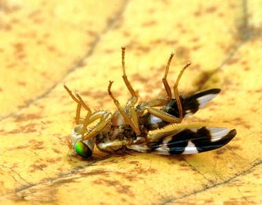 brokenfly