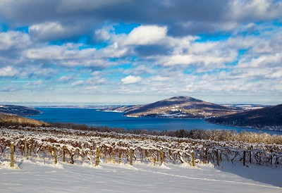 winter grapes and lake