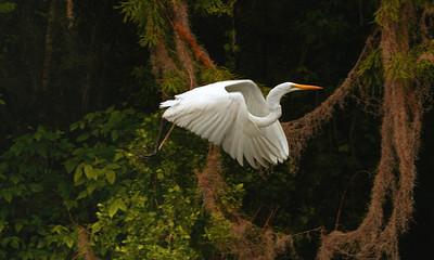 egret takeofft