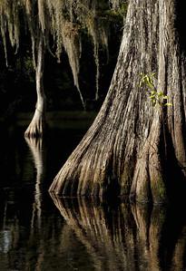 cypress mood