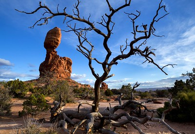 tree at balanced rock