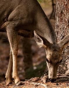 deer mood