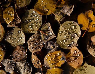 aspen after rain