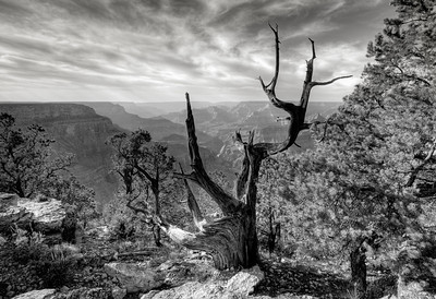 Black and white canyon