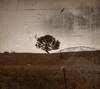 """""""Vintage Tree"""""""