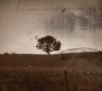 """Crooked Tree"""