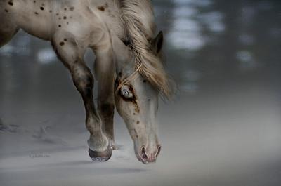 'War Pony'