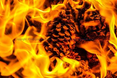 Pinecone Campfire