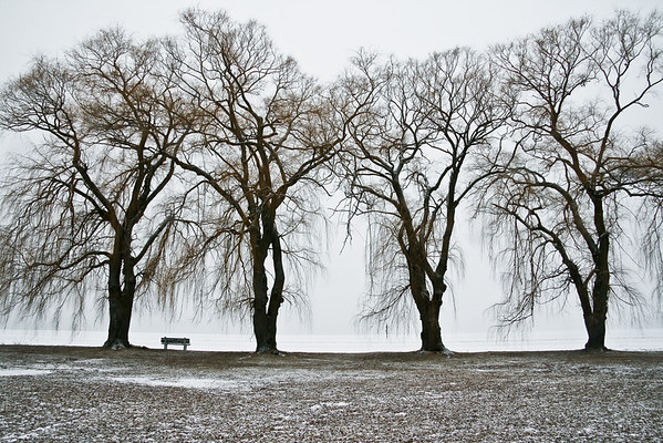 Stewart Park in Winter