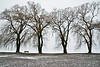 Stewart Park in Winter