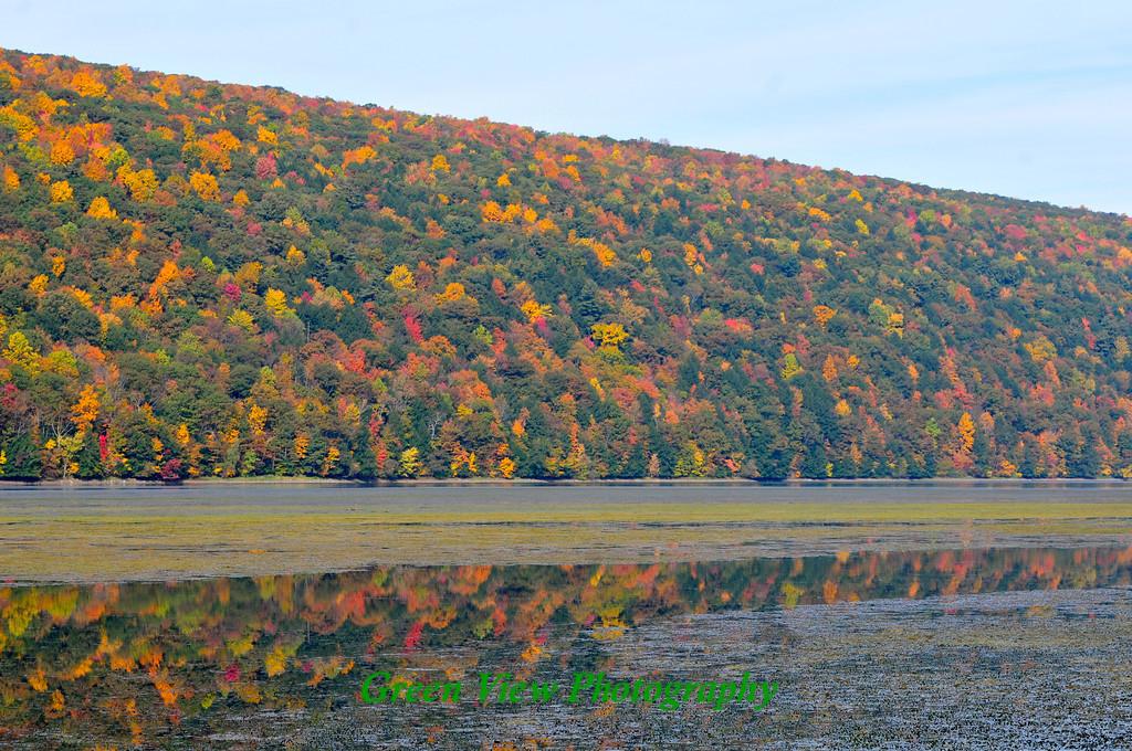Hemlock Autumn Hillside