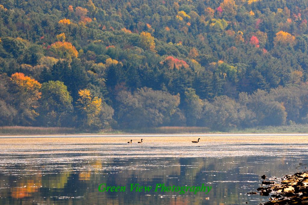 Ducks on Hemlock Lake
