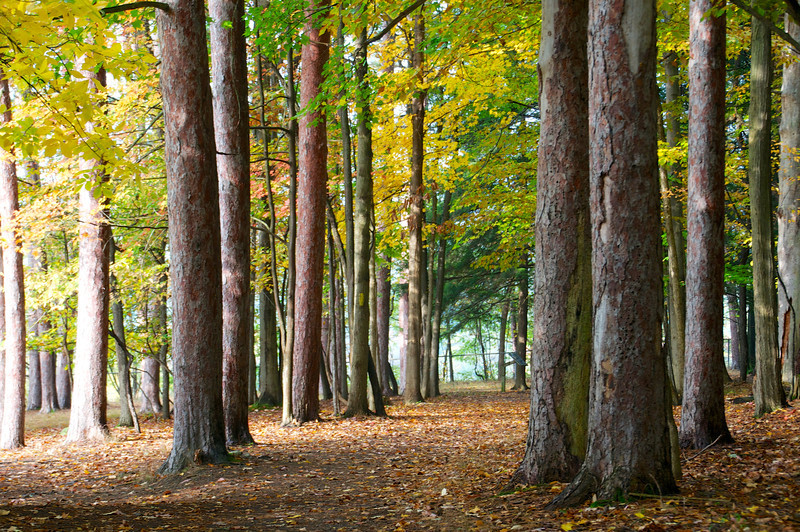 Autumn wooded trail