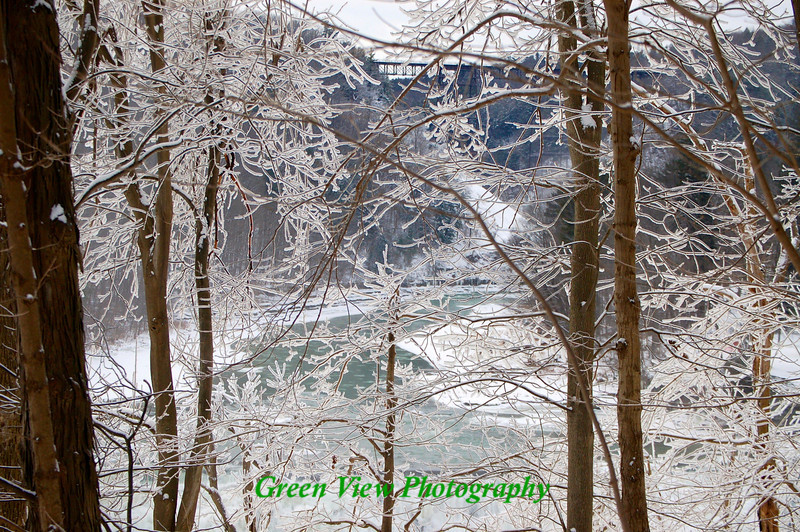 Trestle through the icy branches