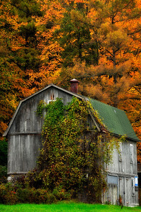 The Old Barn and Fall Foliage, Finger Lakes.
