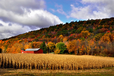 Red Barn and the wheat field, Finger Lakes