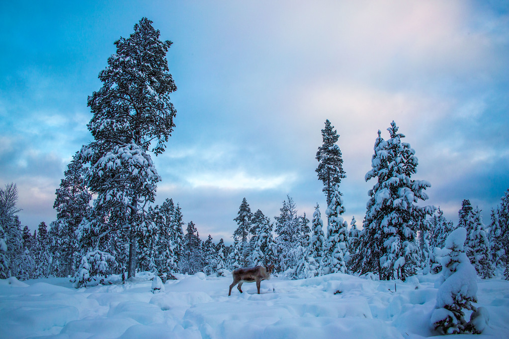 lapland winter