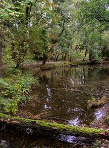 Forested walks, Seurasaari, Helsinki