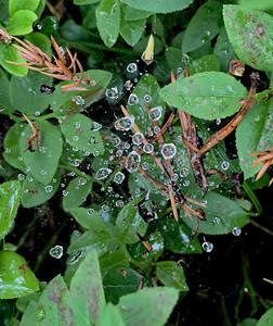 A spider web after rain