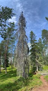 Tree, Hossa National Park