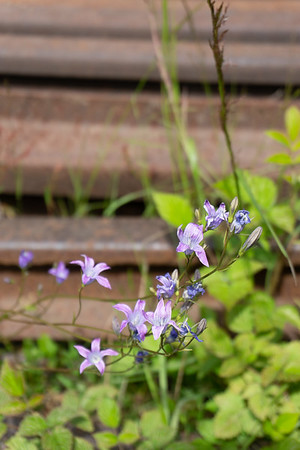 Flowers against the rails, Porvoo