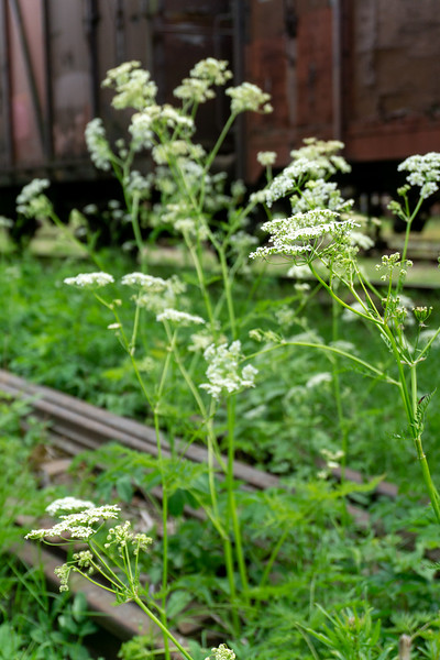 Flowers in the trainyard, Porvoo