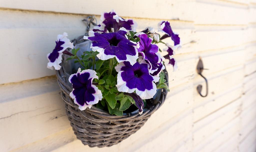 Basket of Flowers, Old Porvoo