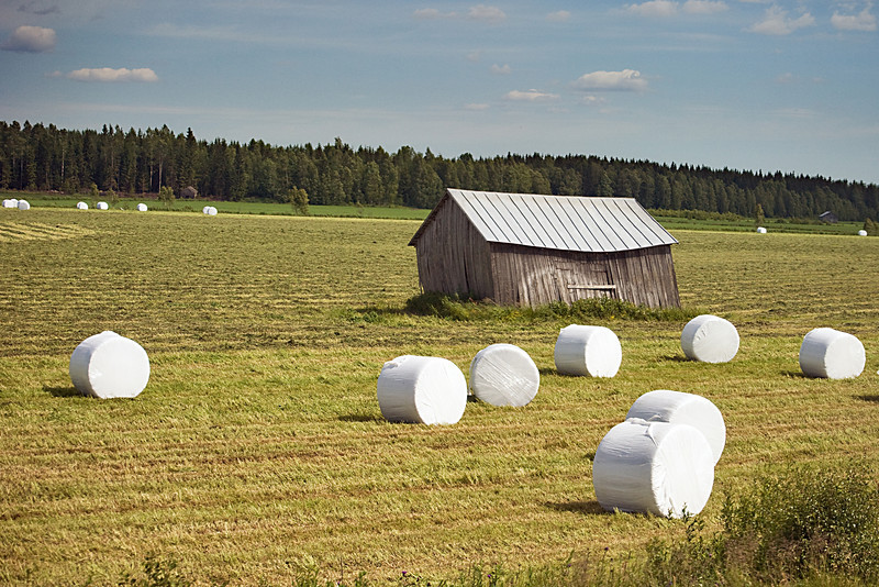 Sunday, July 4, 2010<br /> <br /> Making Hay<br /> <br /> The 7+ hour train ride to Oulu on Saturday proved restful after five days of activity.  Urban sprawl does not seem to exist in Finland and after changing trains at Tampere, the second largest city,  scenes like this were pretty much the norm.<br /> <br /> On a side note, the train made a stop in the rural township of Kauhava, which is where my Great-Grandfather came from. I took a picture of the station to bring home with us.