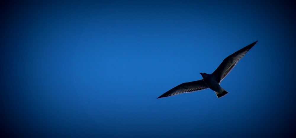 Seagull soaring in the sky