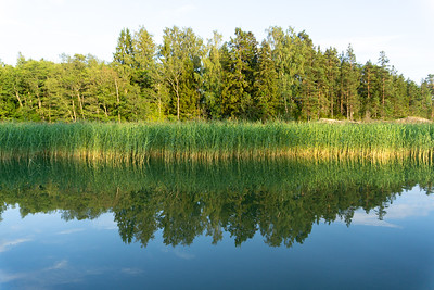 Rushes along the shore, Baltic Sea, Southwestern Finland