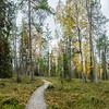 Forest in Oulanka National Park.