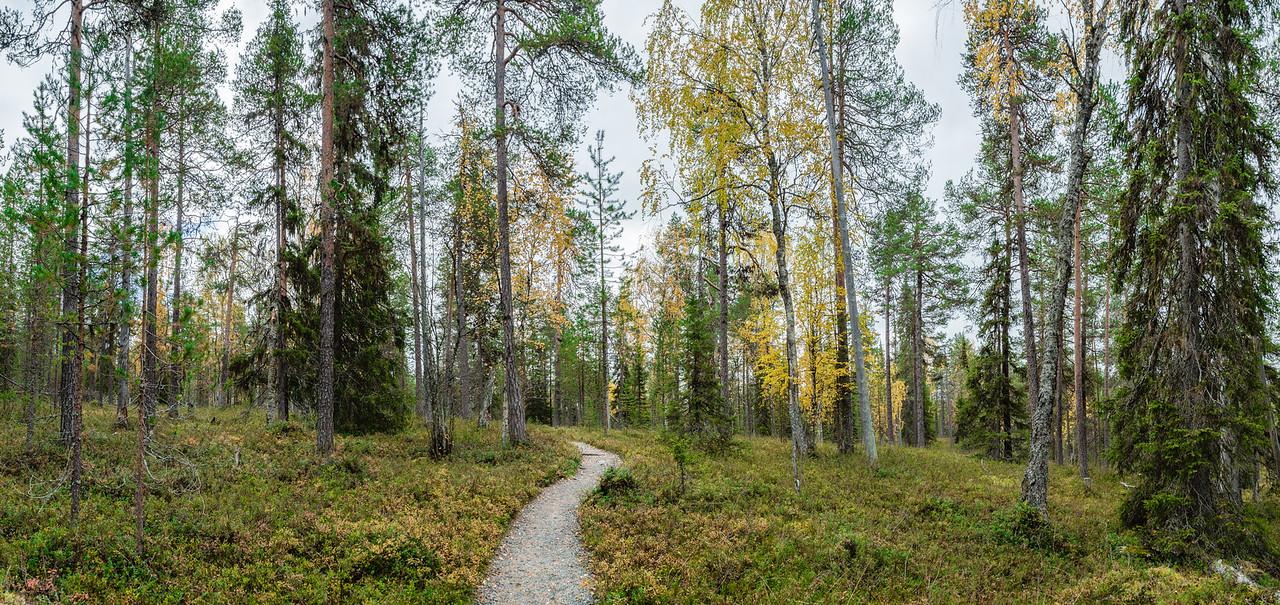 Oulanka Trail