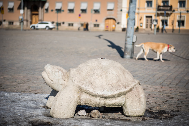 Stone shaped turtle | Helsinki | Finland