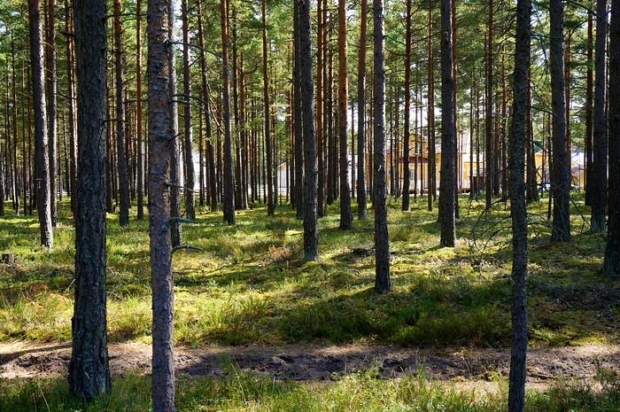 A little walk through the woods in Hanko, Finland