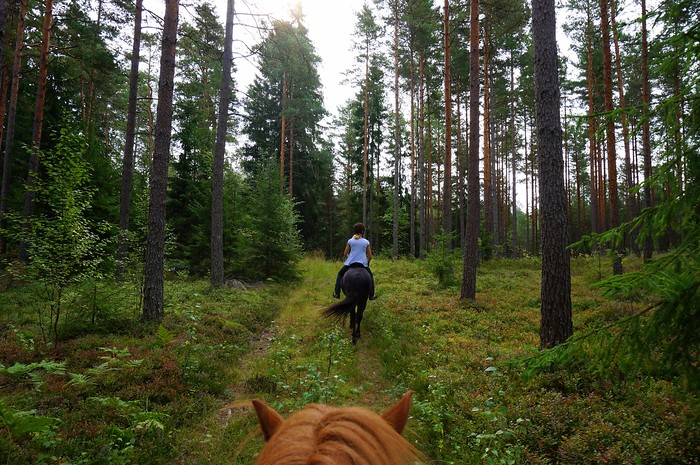Horse riding through the forest in Kimito Island, Finland