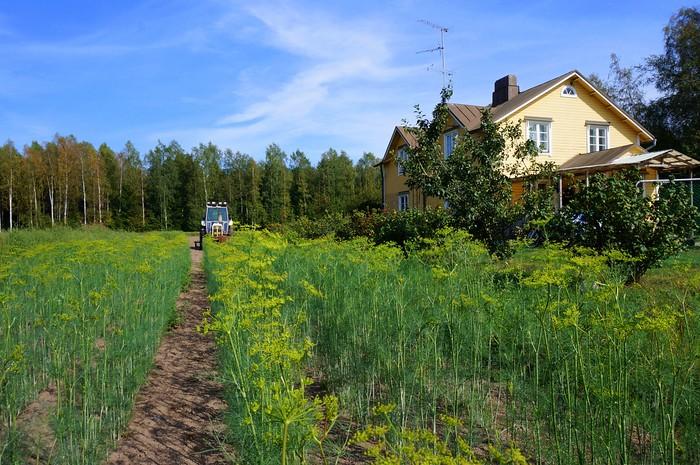 Local farm in Hanko