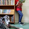Fiona a Great Dane visited Angela Gill's Special Education classroom at Reingold Elementary School on Friday morning with her owner Helen Donlan. Fiona sits by as Alex reads during class. SENTINEL & ENTERPRISE/JOHN LOVE