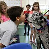 Fiona a Great Dane visited Angela Gill's Special Education classroom at Reingold Elementary School on Friday morning with her owner Helen Donlan. Fiona gives a kiss to student Jonathan Silvestre, 8, during her visit. SENTINEL & ENTERPRISE/JOHN LOVE