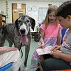 Fiona a Great Dane visited Angela Gill's Special Education classroom at Reingold Elementary School on Friday morning with her owner Helen Donlan on left. Students Ciara Gauthier, 10, and Jonathan Silvestre, 8, read to Fiona as she lies around during class. SENTINEL & ENTERPRISE/JOHN LOVE
