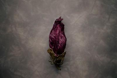 Fiori Morti — Hibiscus