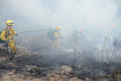 Dave_Mills_Photo_Bee_Fire-119