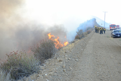 Dave_Mills_Photo_Bee_Fire-104