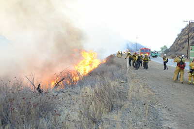 Dave_Mills_Photo_Bee_Fire-108