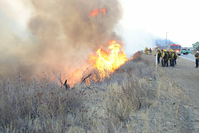 Dave_Mills_Photo_Bee_Fire-109