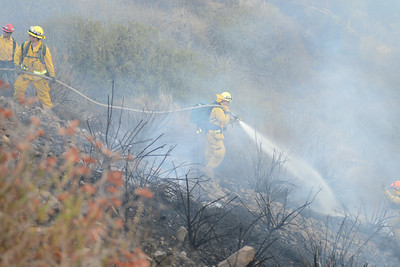 Dave_Mills_Photo_Bee_Fire-125