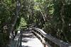 wavy path