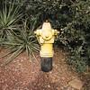 Sedona, AZ hydrant