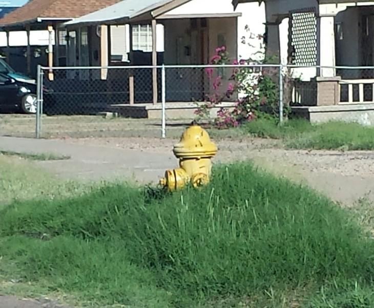Hydrant PHX overgrown