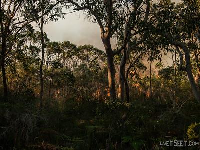 Salt Ash Bushfire
