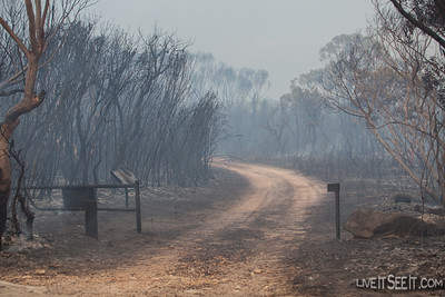 Towlers Bay track on the eastern side of West Head Road. The fire burnt through here with some intensity.